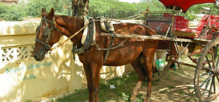 Exploring Bagan in a horse cart